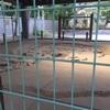 国分寺〜武蔵野台地のハケを歩く