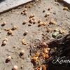 韓国語単語:秋の韓国では気をつけて!銀杏の実がヤバい!