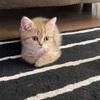 アメリカで猫を飼う方法①