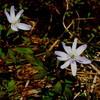 二上山の花