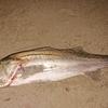 夜漁  3HIT 1GET 🎣🐟