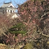 春の訪れ(^^♪ 南総里見八犬伝ゆかりの城山公園