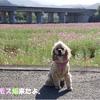 【わんこと旅】 レスパスシティ見奈良 【愛媛県】