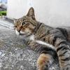 9月前半の #ねこ #cat #猫 その4