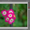 darktableで花を撮る(7)
