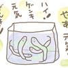 野菜の保存~節約野菜のもやしはプールがお好き。