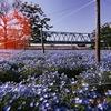 四月の風/春の遺影