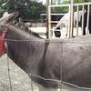 【観光】那須観光にて南ヶ丘牧場へ①動物と戯れてきたよ編