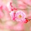 風の時代、女性が豊かに軽やかに生きるヒント【2/11(木・祝)ヨニケアレッスン開催します♪】