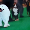 【索引】★ DOG  GALLERY ★