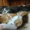 なんだ、猫の部屋飼いにDIYは必須じゃないか。