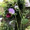 花開く日々、育てる日常