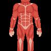 上腕三頭筋の特徴を理解して効率よくトレーニングしよう