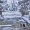 【秒で朝ご飯】超特急で冬がやってきた!春雨ヌードル×卵で体を温めます