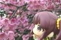 智絵里ちゃんと桜を見にいった日
