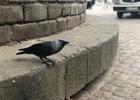 ポーランドの鳥かわいい