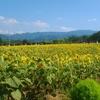 和泉リサイクル環境公園へひまわりを見に行く
