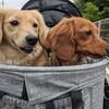 犬多頭飼い日記:『AirBuggy for Pet DOME2』を購入しました!