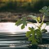 初心者だけど家のベランダで家庭菜園始めてみた!栽園セットがお得でおすすめ!
