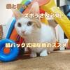 猫と暮らすズボラさん必見!紙パック式掃除機のススメ