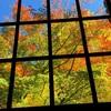紅葉と黄葉のステンドグラス