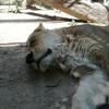 王子動物園と天王寺動物園どっちが楽しいか比較してみた(子連れやデートで)