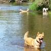 進撃の犬たち 久しぶりの川編