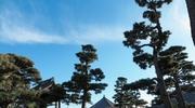 ブラ○モトシ 東海道編 六日目 三島~原#3 白隠禅師の里、真っ直ぐな道をひたすらに進め!