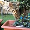 クスコで出会った猫たち。猫よりも犬が多い街で猫を追いかけた(世界の猫探し279~284匹目)