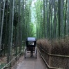 8月21日 放置竹林整備がもたらすもの