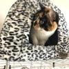 12月22日 河原猫の記録