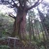 都内の巨木をめぐる秋川丘陵ラン