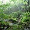 大岳山~苔むす清流を歩こう(御岳山→ロックガーデン→大岳山)