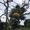 5-204   あゝ…柿よ…お前もか!!
