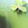 稚魚の成長
