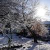 日本 氷点下の朝