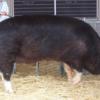 【黒豚食べないと鹿児島来た意味が無い。】黒豚「六白」を堪能 鹿児島グルメには外せない一品