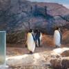 長崎ペンギン水族館に行ってきました ~後編~