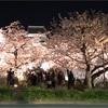 桜の名所舞鶴公園、ライトアップが美しい「福岡城 さくらまつり」