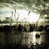 【photo】すすき/Japanese pampas grass