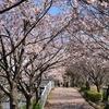 【船橋 海老川 2019】今年のお花見は寒かった!