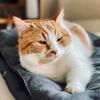 【猫学】猫にも利き手があるらしい。愛猫の行動から利き手判定してみた。