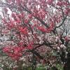 4月4日のブログ「週末のユックリとした12キロのジョグ、読みかけの本を読み進め、岐阜リーダーズの会「浅野健司と各務原市の未来を語る会」など」