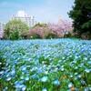 東京都内の子連れおすすめお花畑のある公園【大島小松川公園】