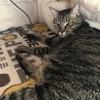 猫におススメ!キャティーマン (CattyMan) モダンルーム 毛づくろいブラシ