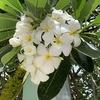 「サムイ島の魅力」時を忘れて五感を刺激する日々