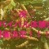 サバイバル体験会、開催決定(^○^)!!!