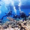 ♪世界屈指の透明度、慶良間でアドバンスおめでとう♪〜沖縄ダイビングライセンスPADIアドバンス〜