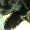 【韋駄天猫】飼い猫が脱走して1ヶ月が経過したんだが?