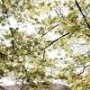 吉野で桜撮影 vol.6